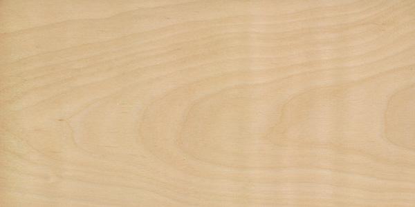 betula-pendula hout