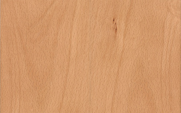 fagus-sylvatica hout